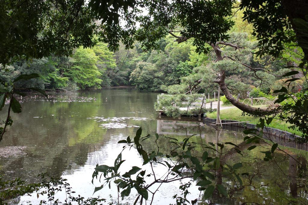 Pond at Inner garden