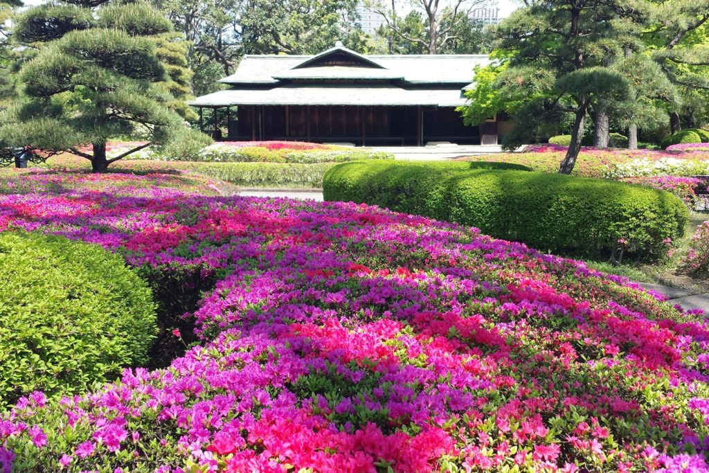 Azalea by Tea House