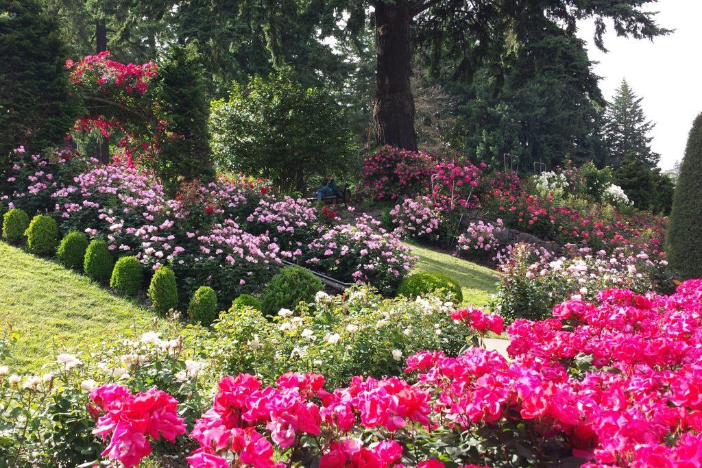 Rose Garden view